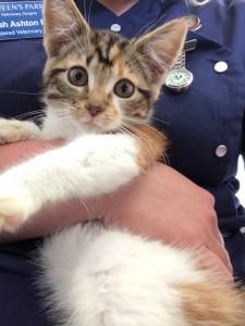 Ariel - Kitten